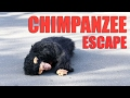 Chimpanzee zoo escape emergency drill in Tokyo