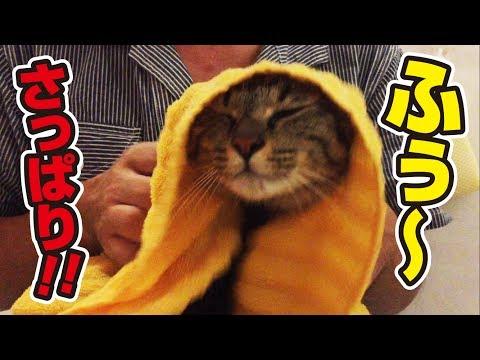 わんぱく兄弟猫、一年ぶり二度目のお風呂に連れて行かれる!〜Brothers cat taking a shower!〜