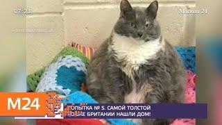 Самой толстой кошке Великобритании нашли дом - Москва 24