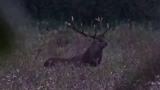 Фото охота на оленя