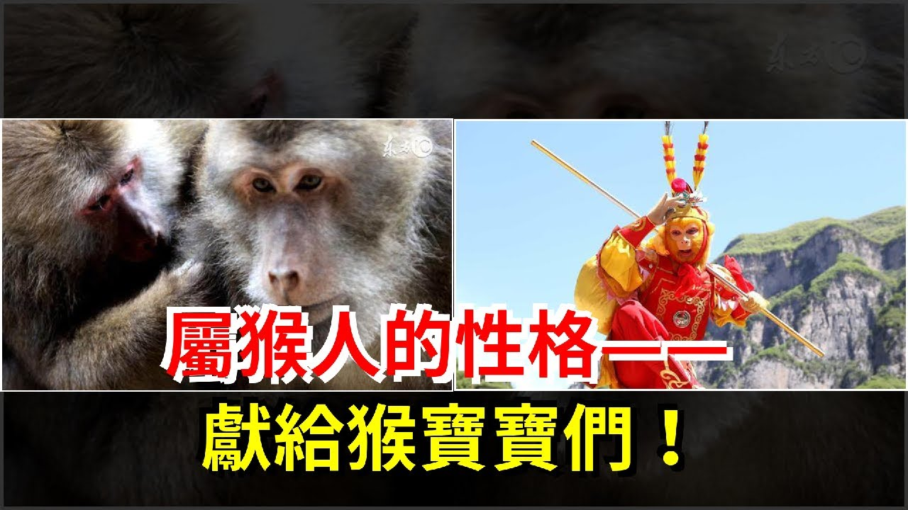 屬猴人的性格——獻給猴寶寶們!,社交手腕高明,即興詩人和善於調動屬猴人人積極因素的人,25歲出生的屬猴人,一生吉祥如意! - 每日頭條