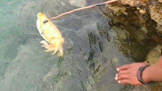 Gambar cover MANUSIA SKIL DEWA?🙄  Mancing Tanpa UMPAN Dapat banyak IKAN _ catch cuttlefish with bamboo sticks