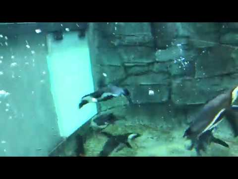 Abnormally Normal: CMZooZen With The Penguins