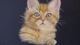 Katze zeichnen bunt mit Pastellkreide / cat drawing soft pastels speed drawing