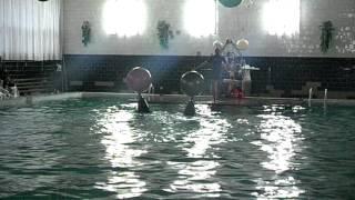Дельфины в Хмельнике(выступление дельфинов в г. Хмельник (Винницкая область), 2015-11-27T16:21:58.000Z)