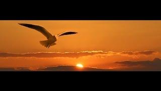Flying Dreams - Sandra Stoermer - Piano/Strings Version