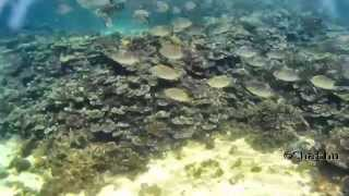 Skin diving at Bar Reef, Kalpitiya, Sri Lanka