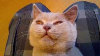 Уход за котёнком, выпадение зубов / Caring for a kitten, tooth loss