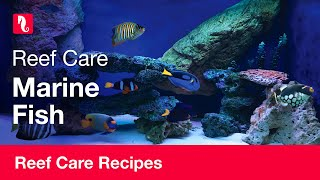 Marine fish | Reef care recipe