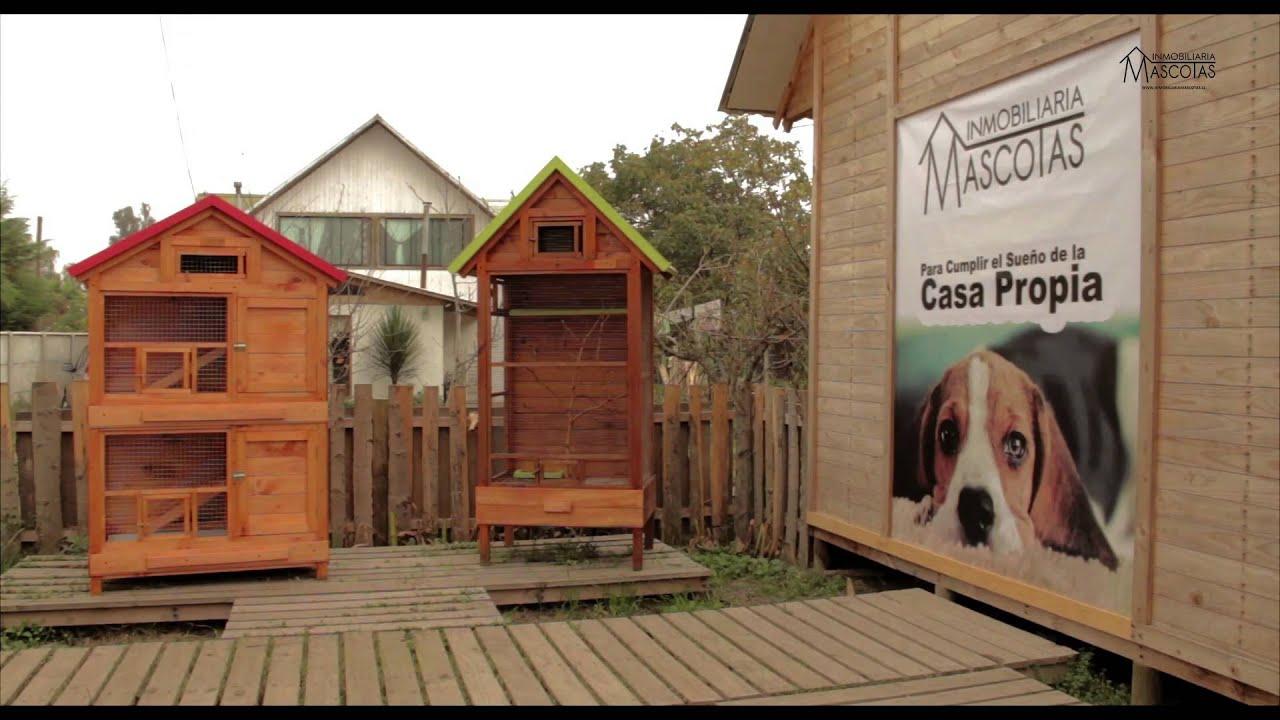 Casas para perros inmobiliaria mascotas youtube - Casa de perro grande ...