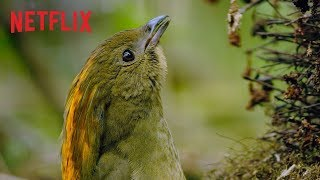 Dancing With The Birds | Clip | Netflix