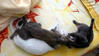 Кошачья групповуха