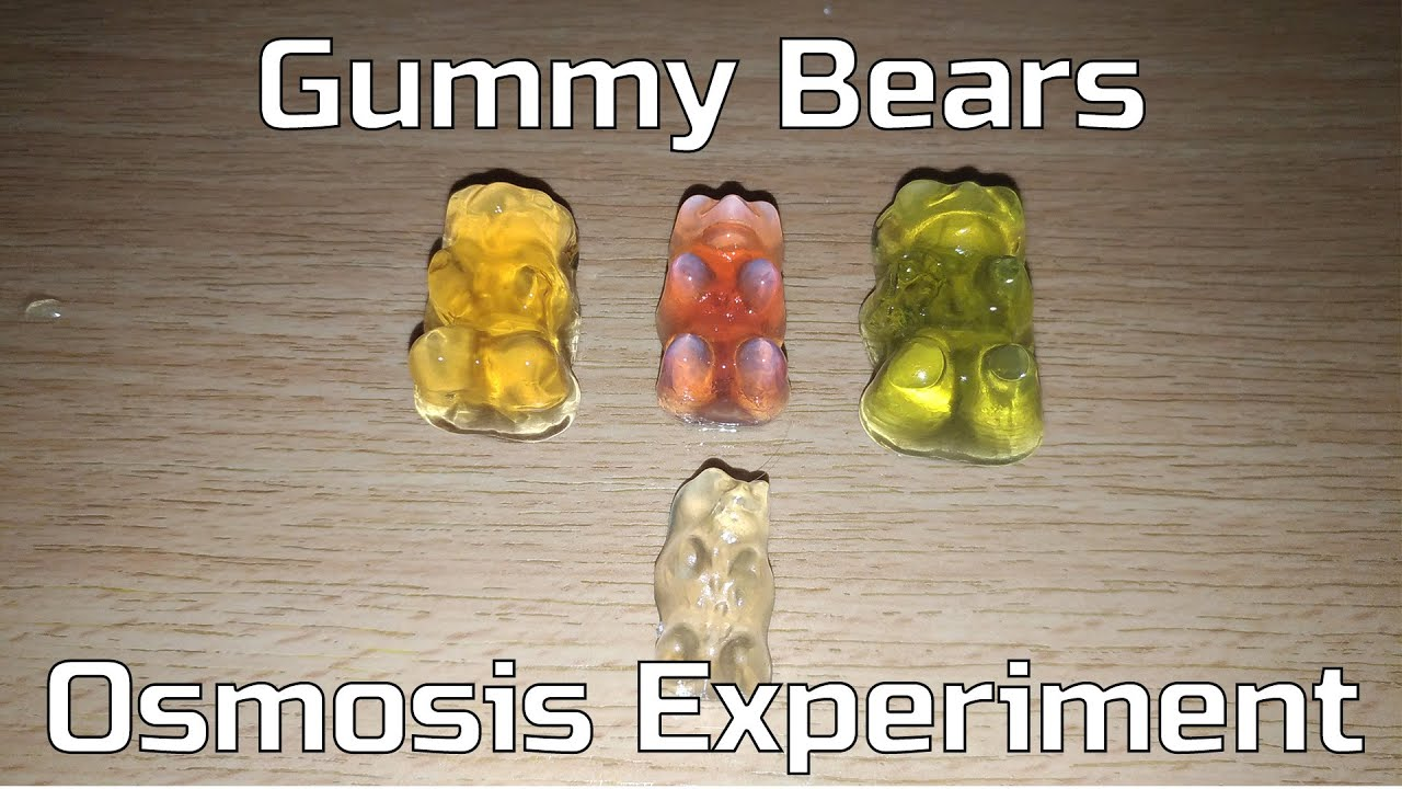 osmosis in gummy bears Osmosis is one of the most important concepts in biology but it can be hard to grasp we will show you an easy and fun way to learn it by using gummy bears.