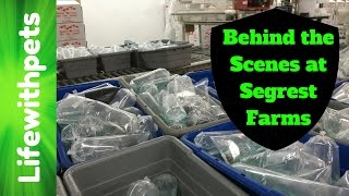 Behind the Scenes tour at Segrest Farms (America's Largest Aquarium Fish Distributor)