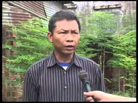 Người đầu tiên trồng cây chùm ngây tại Gia Lai