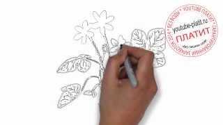 Нарисованные карандашом цветы  Как нарисовать цветок лютика(Как нарисовать дружную семью поэтапно карандашом за короткий промежуток времени. Видео рассказывает о..., 2014-07-02T05:41:00.000Z)