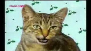 Śpiewające Koty xD Cicha Noc