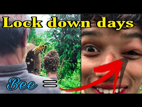 Bee Vs Man 😂    My Lock Down Days At Village    MRB Vlog