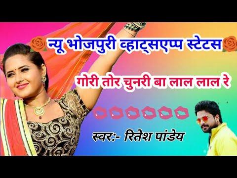 ✔✔gori tori chunri ba lal lal re status❤new bhojpuri whatsapp status ❤ritesh pandey song 2019