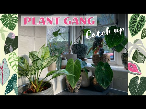 NEW PLANTS UPDATE - CHAT - TIPS 💚🌿🏡