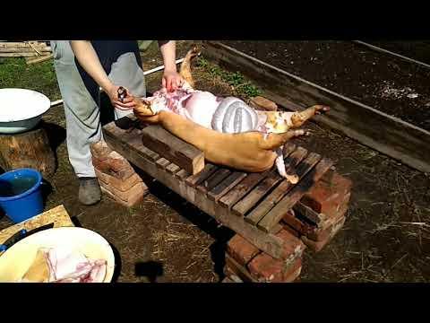 Как разделать свиную тушу. Домашняя разделка вьетнамской свиньи на засолку и продажу.Выход мяса .