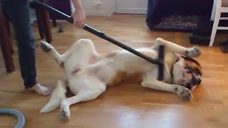 "Забавно видео: Dummy Dogs || ""Dog Fails"" By FailArmy"