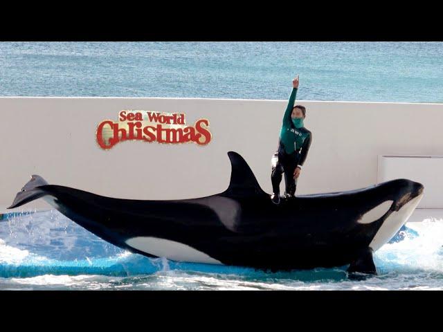 Orca Show Christmas Version at Kamogawa Sea World 【4K】