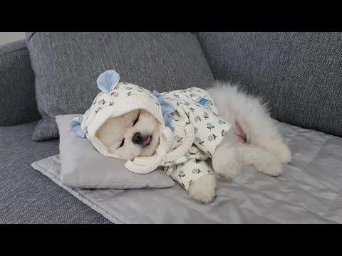 패셔니스타 강아지  옷 정리 하는 날! (애견의류 세탁, 수납방법)