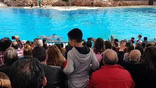 Αττικό ζωολογικό Πάρκο η επίδηξει δελφινιών