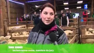 SIA 2016 : concours régional jeunes bergers lorraine