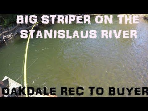 STANISLAUS RIVER - UPPER RIVER STRIPER FISHING