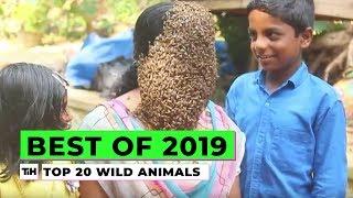 Best of 2019: Top 20 Wild Animals | This is Happening