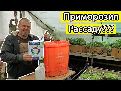 Как спасти подмерзшие кусты томатов