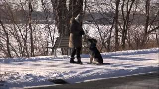 Rafiki - Boot Camp Dog Training Video Minneapolis