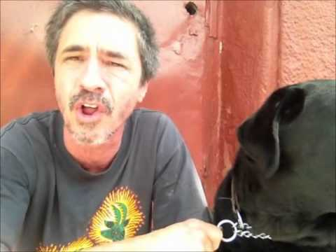 Bad dog owner with Vegan Dog, Vegan unhealthy for K9......... Peter Caine Brooklyn dog training