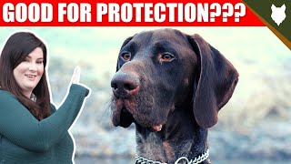 ARE GERMAN SHORTHAIRED POINTER GOOD GUARD DOGS?