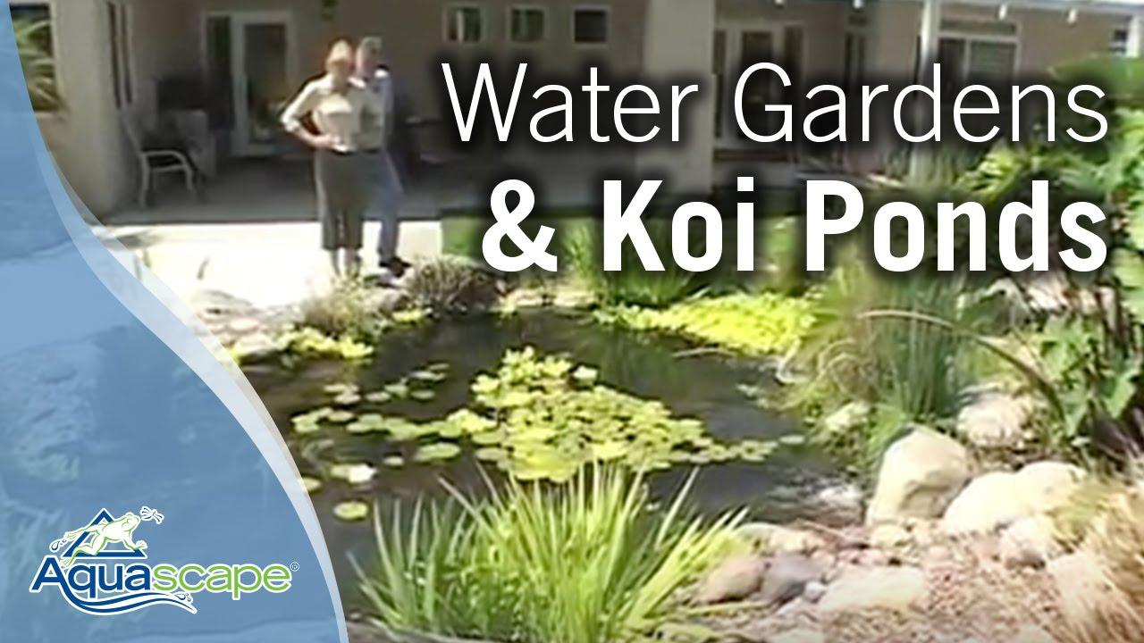 Aquascape Water Gardens, Water Features U0026 Koi Ponds   YouTube