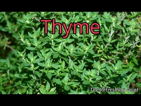 Thyme and Thyme Tea Benefits for Health, Hair and Skin - One of Nature's Top Antioxidant Herbs