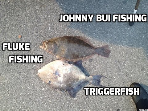 Fluke And Triggerfish Fishing, NJ, 7/5/15