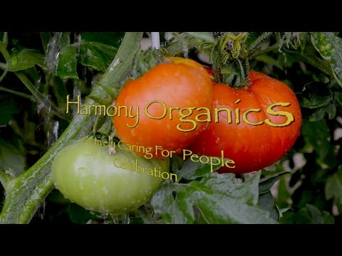 Harmony Organics 4th of July 2015 Music Video