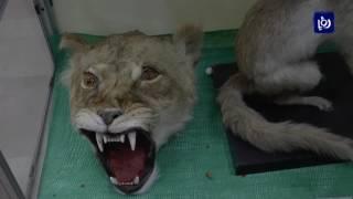 متحف التاريخ الطبيعي في جامعة اليرموك