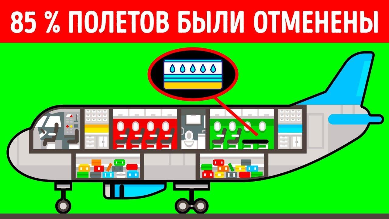 Почему авиакомпания с органической едой и водяными матрасами на борту обанкротилась