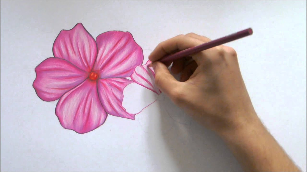 How to draw a flower color pencil drawing