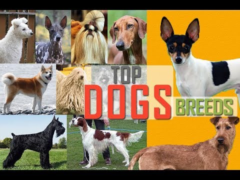 Working Dog Breeds | Dog Breeds | Types of Dogs | Popular Dogs