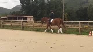Lothus, cheval de dressage à vendre