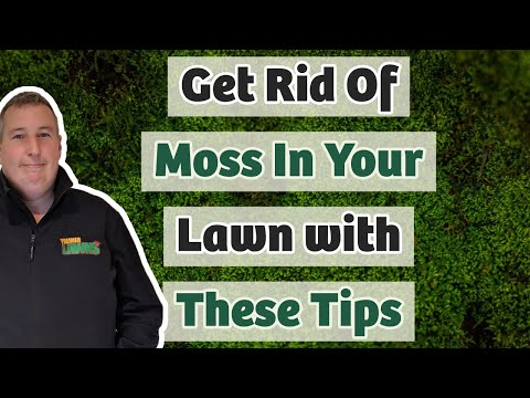 Moss Removal From A Small Lawn - HOW TO