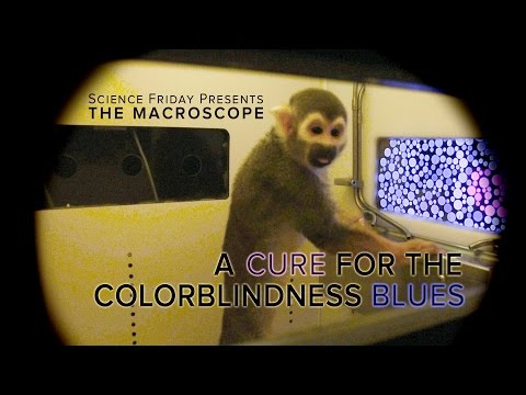 A Cure for The Colorblindness Blues
