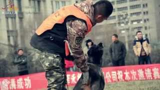 2014 Dog Training K9 Cup In China. Deeply Moving. Film By K-studio