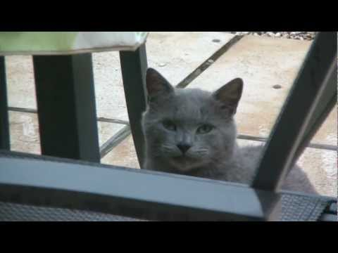 The Story of the Lucky Street Cat called Grizzy