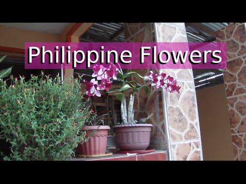 Philippine Plants and Flowers - Filipino Neighborhood Walk